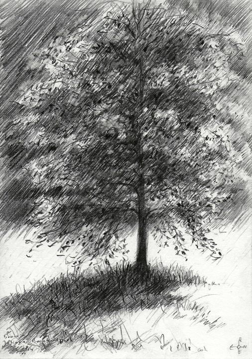 Tree in Juliana-Bernhard park (2014) - Corné Akkers art works