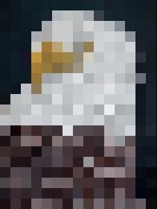 0199 Белоголовый орлан. - Fluid Art Fill