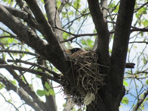 Robins nest - Samantha's night art