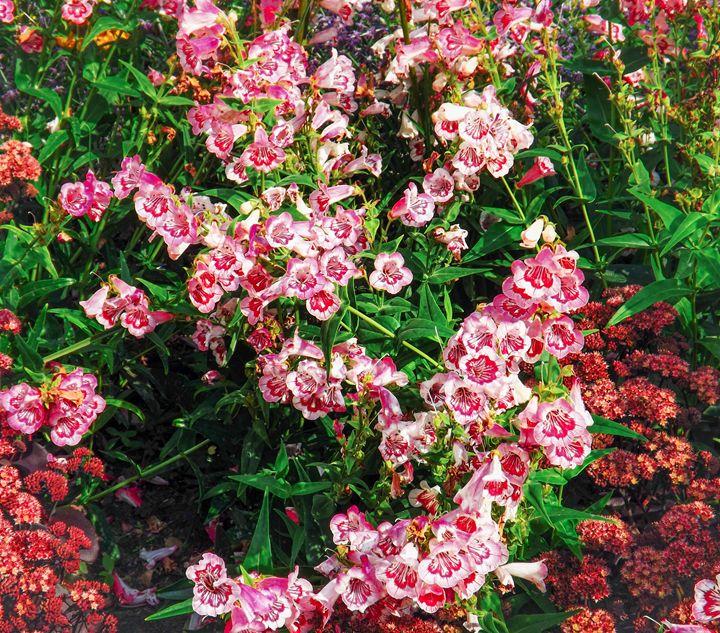 Flower blends - David Jones