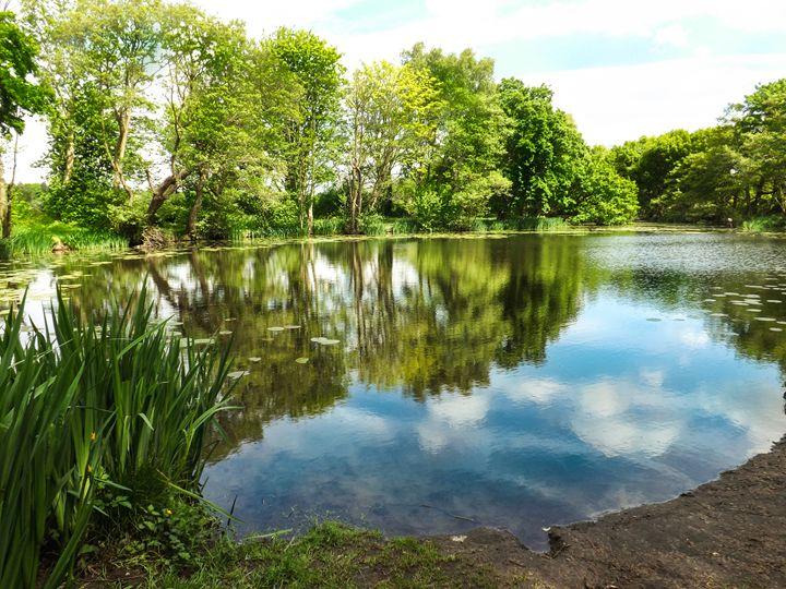 Mirror water - David Jones