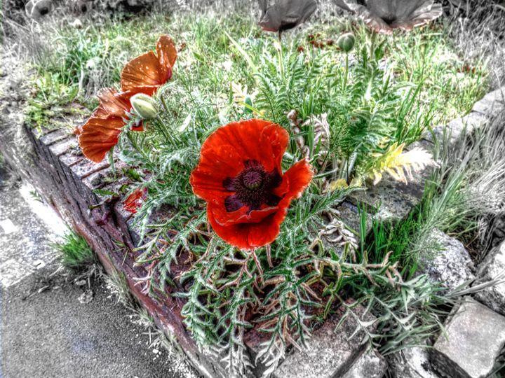Retro Flower - David Jones