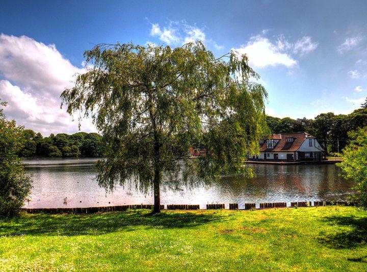 Lake Tree - David Jones
