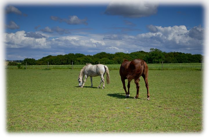 Horse Life - David Jones