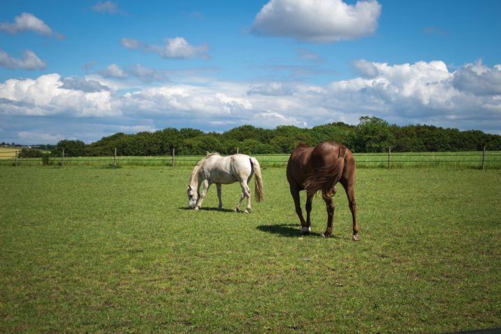 HorseScape - David Jones