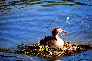 Nesting on the Water