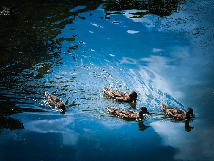 Just Ducks - David Jones