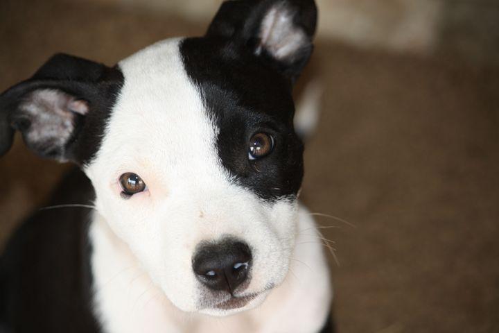Puppy Eyes - AshleyNicole