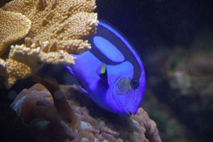 Peekaboo Fish