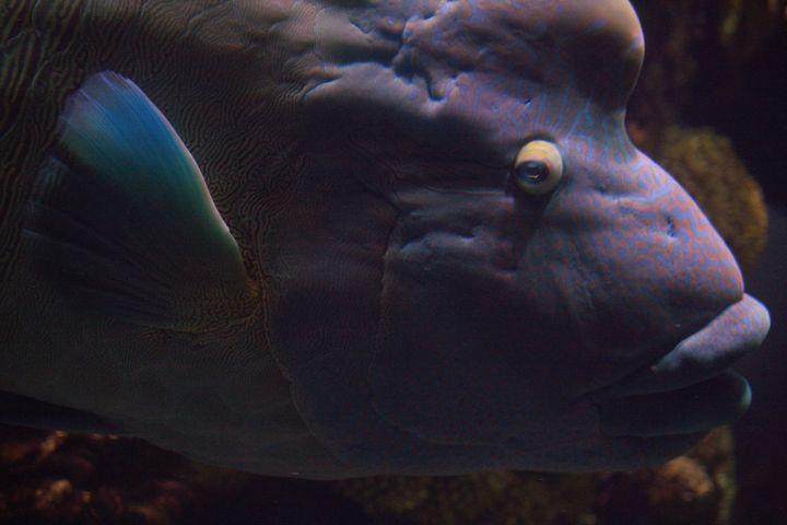 Big Fish - AshleyNicole