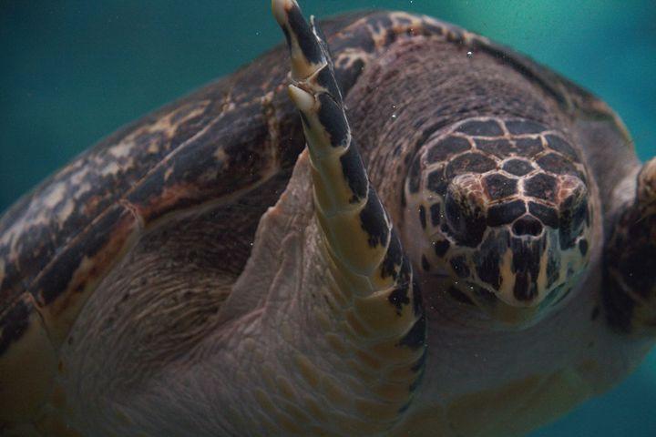 Swimming with Turtles - AshleyNicole