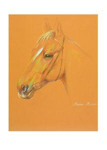 Horse with a warm orange background