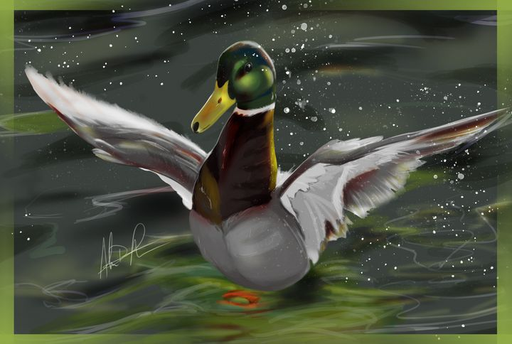 Duck Takeoff - Inspirational Wonders of Nature, by ArceeTheVixen