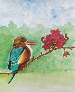 Kingfisher on a Bougainville branch