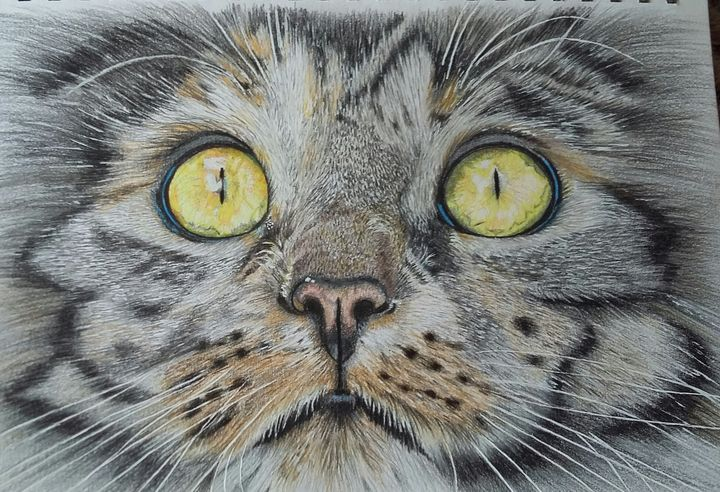 Cats eyes - debz drawings