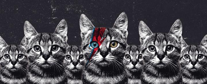 Cat Bowie Legion - Tati Vaz