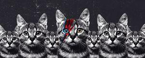 Cat Bowie Legion