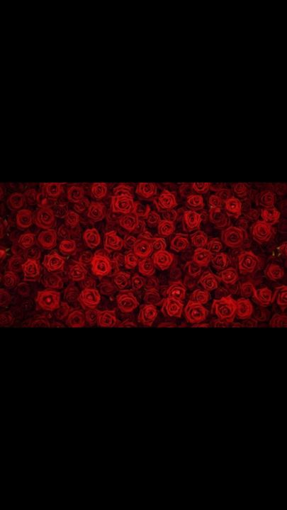 Red roses - Insiderz