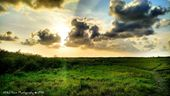 Nature through my Lens