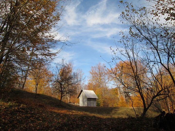 Hut in the forest - forstwalker78