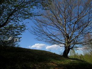 Springtime nature