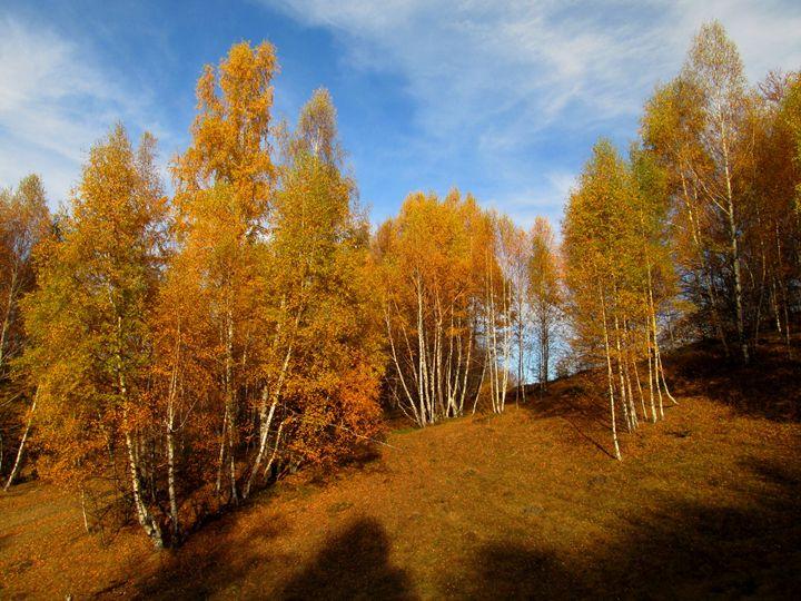 Autumn forest - forstwalker78