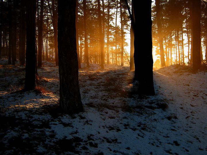 Sunset seen from forest - forstwalker78