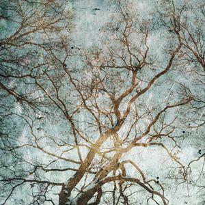 Enchanted Trees - Circe Lucas