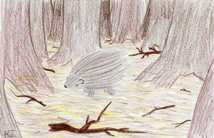 Lone Porcupine