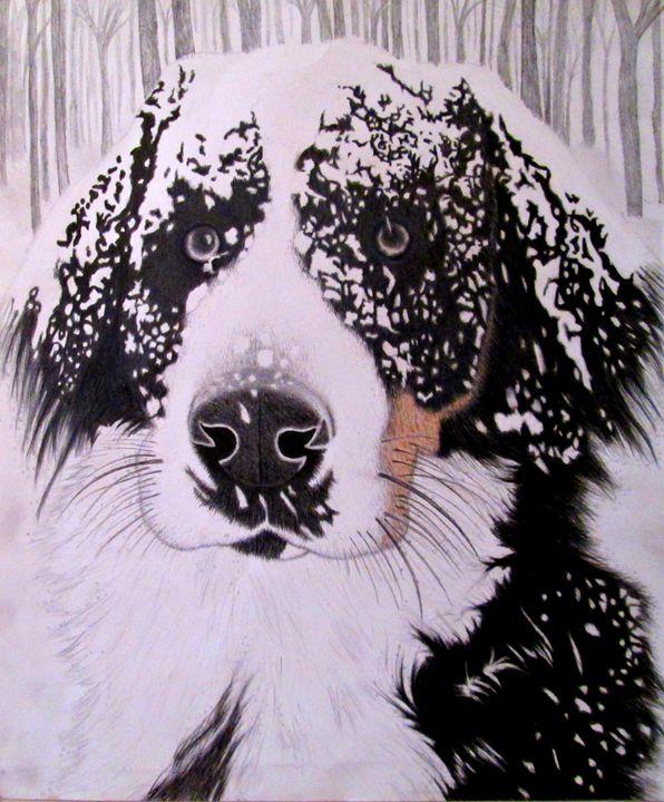 Bernese Mountain Dog - Melissa