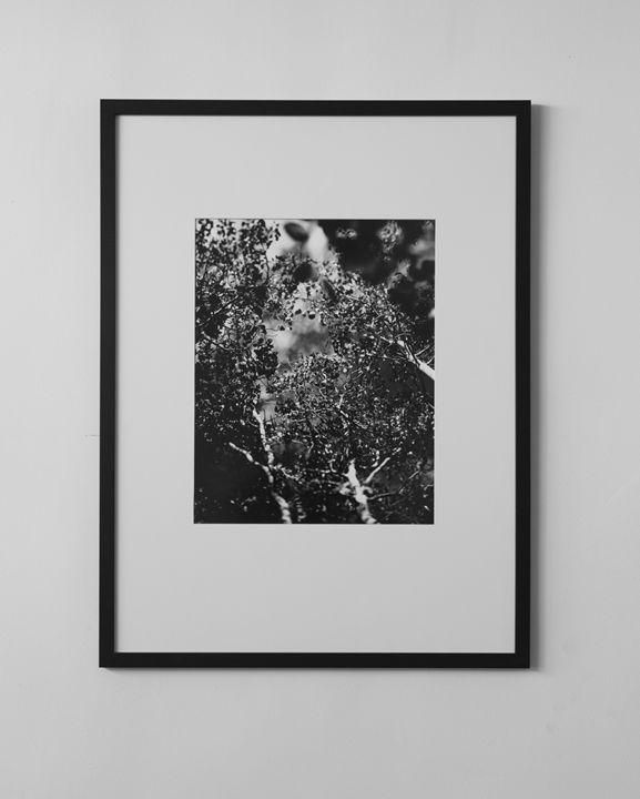Cedar Flats - Justin DeAndrade