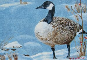 Canadian Goose, After the Storm - E.W.Walsh Paintings