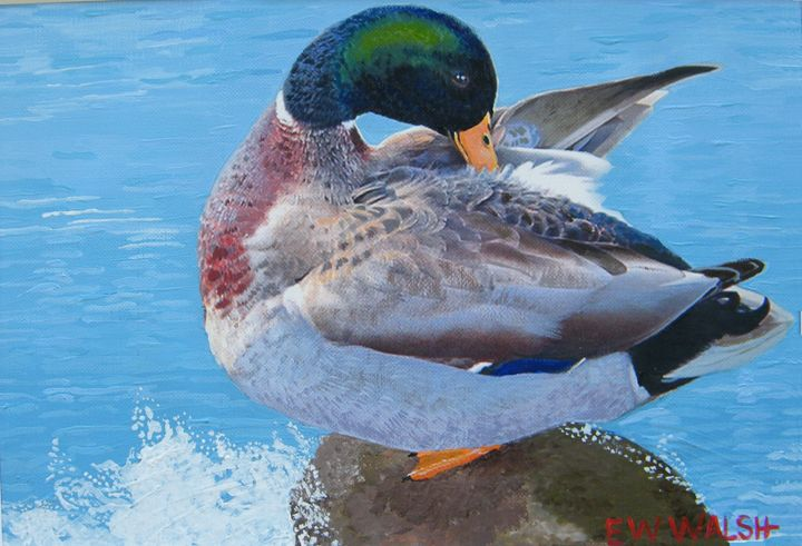Mallard Getting Ready for the Party - E.W.Walsh Paintings