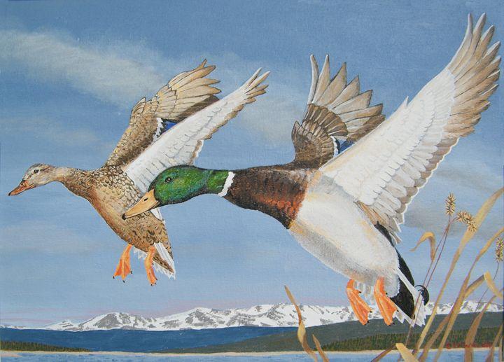 Mallard Ducks Going Home - E.W.Walsh Paintings