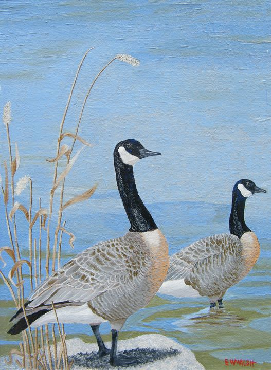 Canadian Geese, Let's go Swimming - E.W.Walsh Paintings
