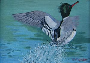 Red Breasted Merganser, The Dancer - E.W.Walsh Paintings