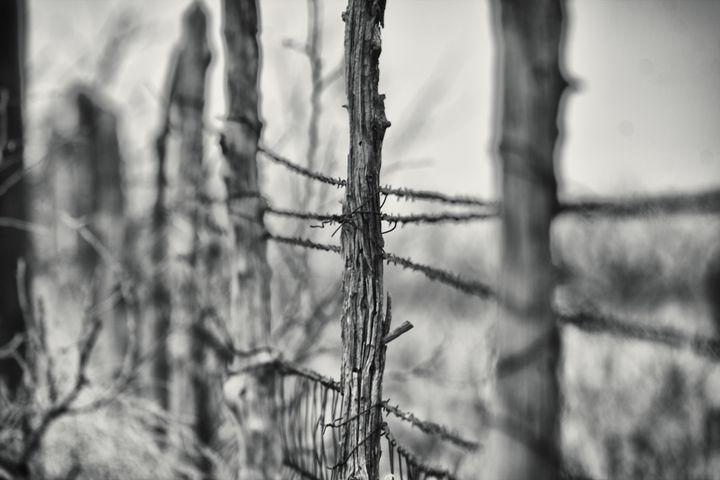 Barbwire - Ron Pierce Photography