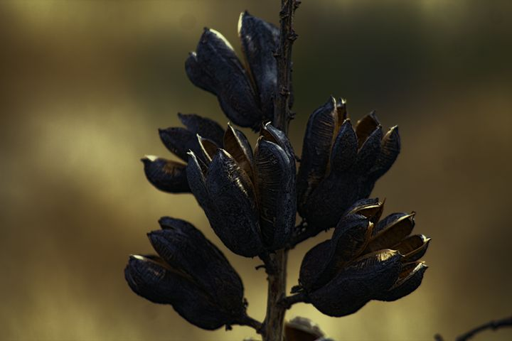 Seed Pod - Ron Pierce Photography