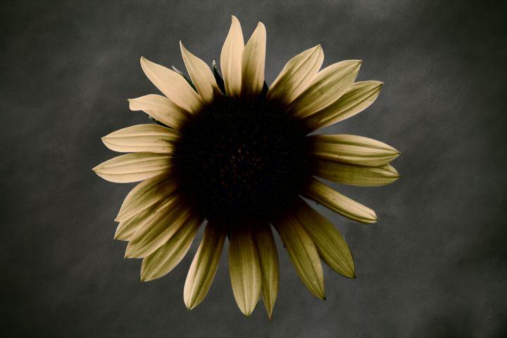 Sunburst - Ron Pierce Photography