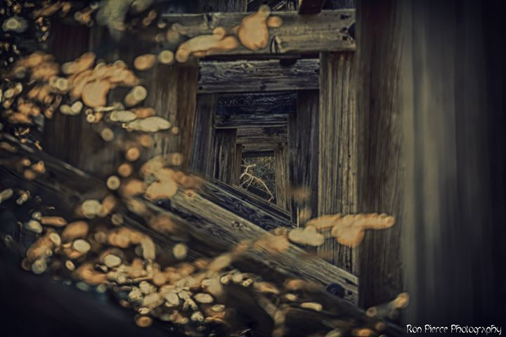 Tunnel - Ron Pierce Photography