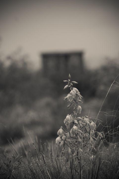Desert Bloom - Ron Pierce Photography