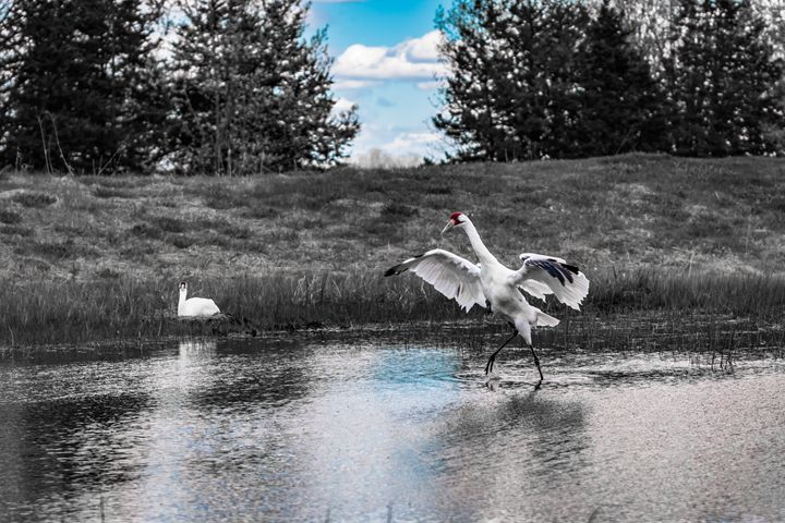 Crane in Selective Color - Kaaptured 4 You