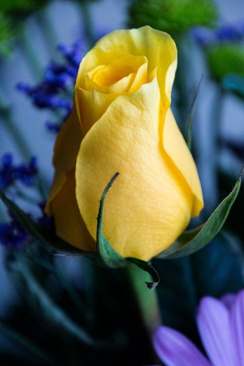 Yellow Bud - Kaaptured 4 You