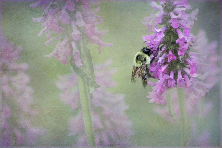 Busy Bee - Kaaptured 4 You