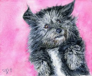 Cute little dog on pink.