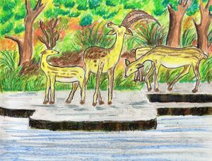 A deer family by the waterside