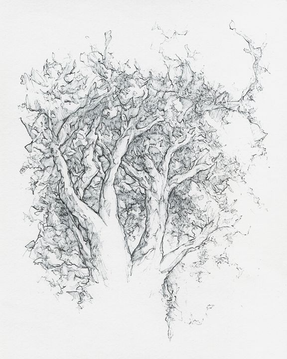 Trees - Phil Baril's Art