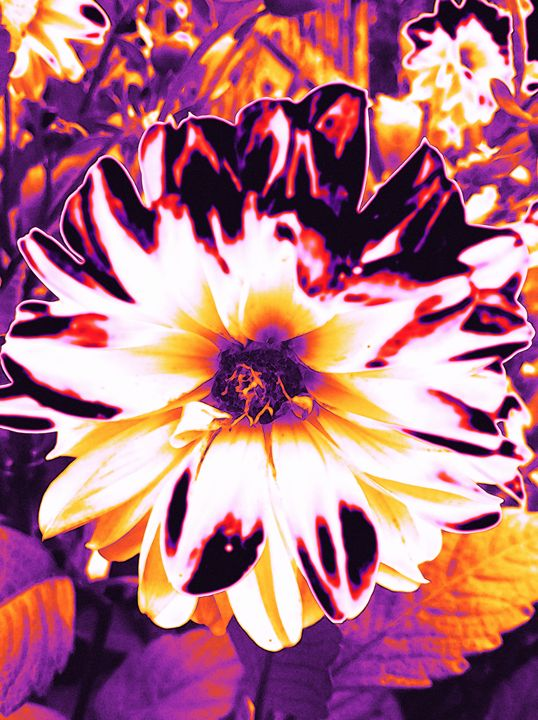 Mommas Psychadelic Flower - BKS Mobile Photography