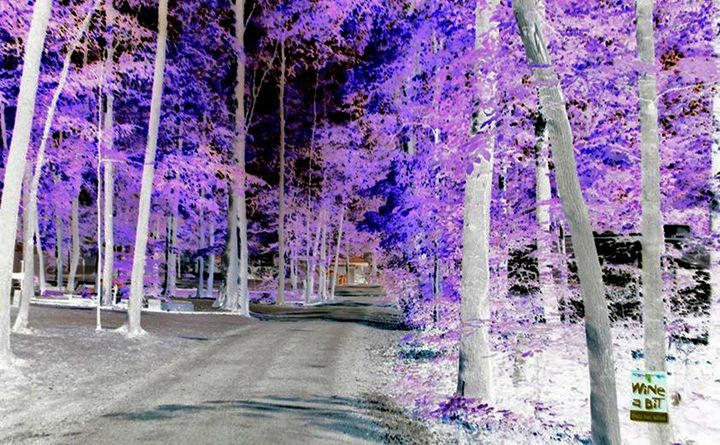 Campground Entrance In Living Color - BKS Mobile Photography
