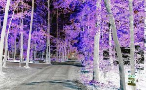 Campground Entrance In Living Color